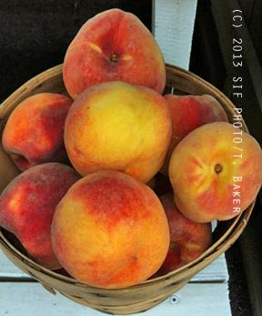 DelMarVa Peaches