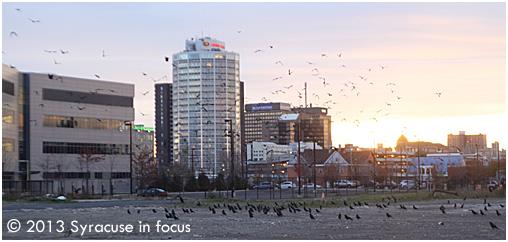 Crows near Washington Street